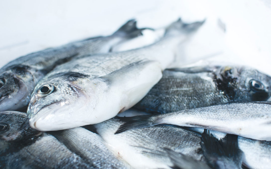 Understanding Fish Welfare and Aquaculture